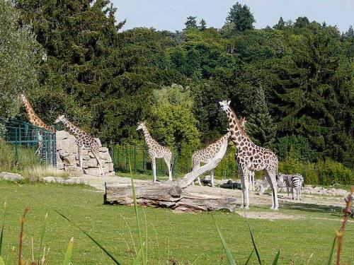 K800_2010_0906Opel-Zoo0004