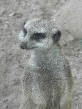 K800_2010_0906Opel-Zoo0013