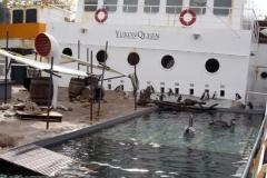 Pinguin und Pelikangehege