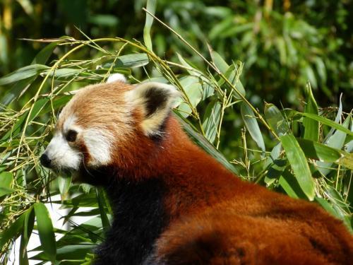K1024_2013_0616Opel-Zoo0081