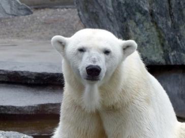 Wilhelma Eisbären Extratourbus