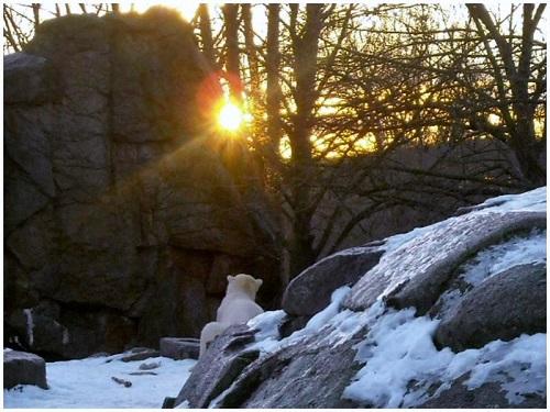 Knut 08.01.2011 - Kopie