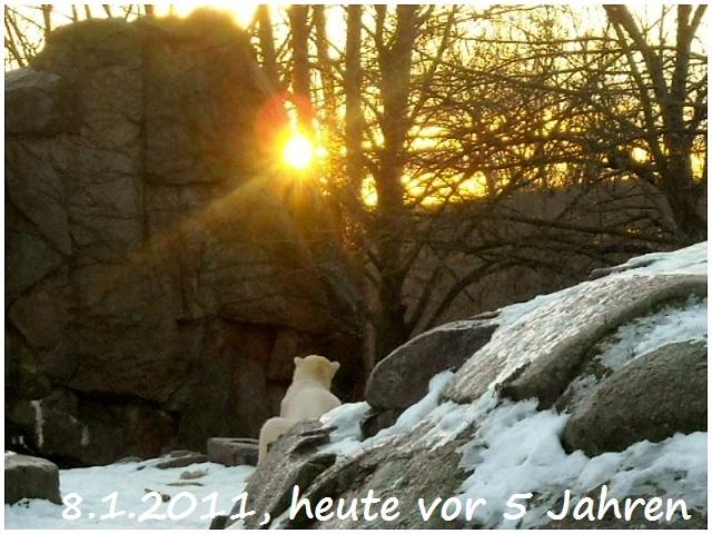 Knut 08.01.2011