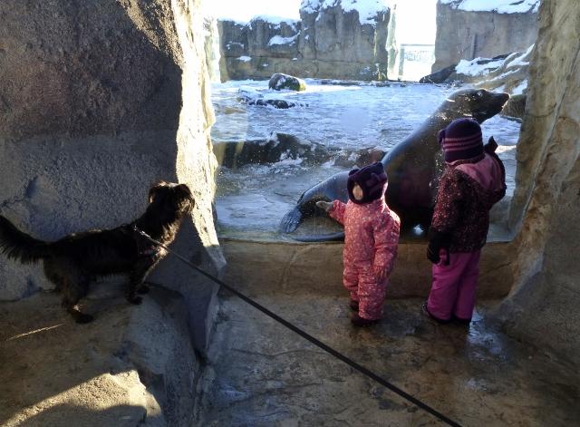 Zoo am Meer mit Buddy &Herrchen 134 (640x471)