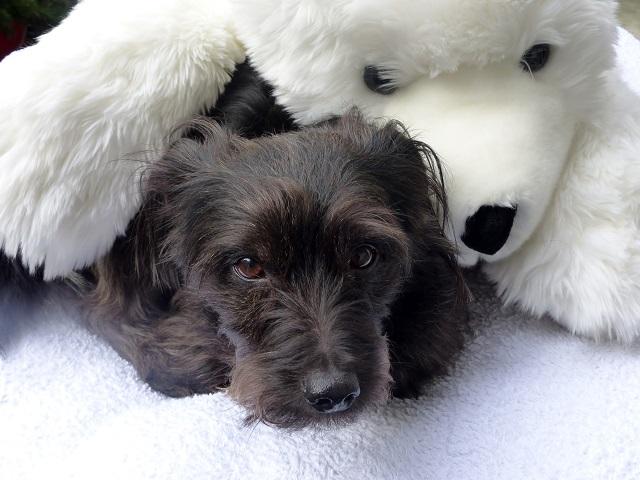 Buddy&Polar Bear 131 - Kopie