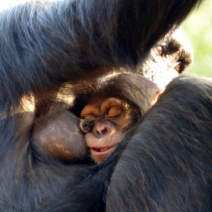 sleeping-at-moms-milk-bar--_22621383470_o (450x338)