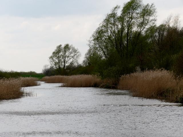Werdersee 155 (640x480)