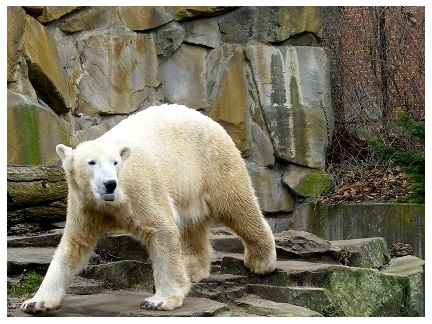 Knut März 2009 (432x324)