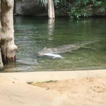 Zoo Köln 419
