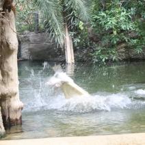 Zoo Köln 425
