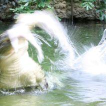 Zoo Köln 431