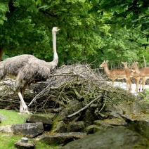 Erl.Zoo Hannover 27.5.2016 056 (640x480)