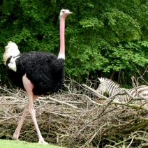 Erl.Zoo Hannover 27.5.2016 062 (640x479)