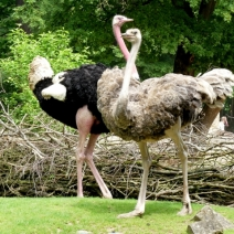 Erl.Zoo Hannover 27.5.2016 064 (640x479)