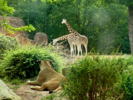 Erl.Zoo Hannover II 329 (640x480)