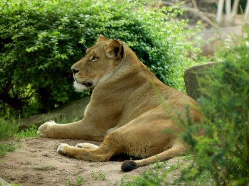 Erl.Zoo Hannover II 340 (640x480)
