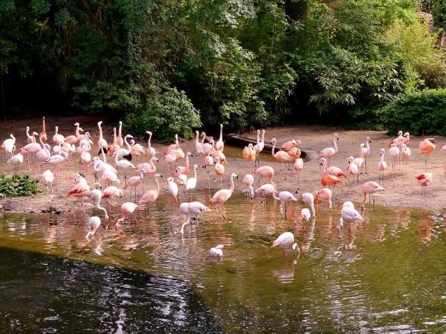 Erl.Zoo Hannover II 529 (640x479)